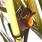 animal symbolism of the bat