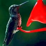 symbolism of hummingbird