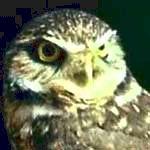 symbolism of Owl