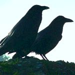 symbolic meaning of blackbirds
