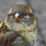 symbolism of sparrow