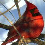 symbolism of cardinal